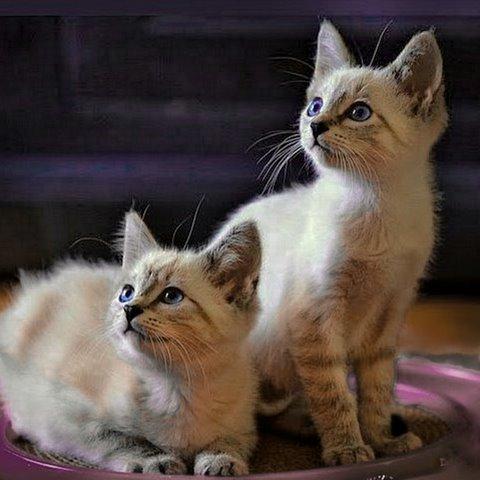 Bece and Kiki